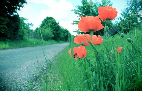 «Без людей»: село Говорунове