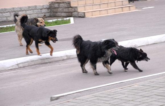 В Держспоживслужбі заявили, що боротьба з бродячими собаками є компетенцією селищної ради